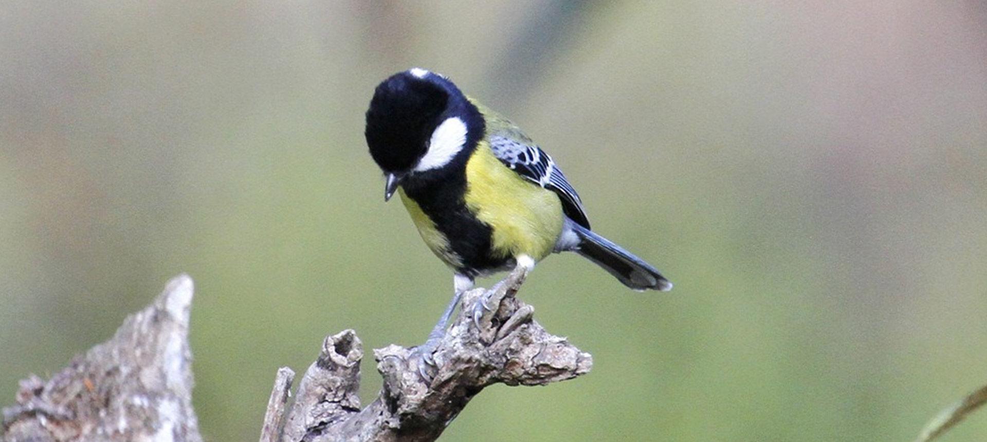 Bird Watching activities in Prakriti Resort and Organic Farm